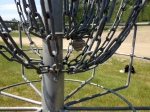 Basket 15 at Oxbow DG Course has a hornet's nest hanging from the chains... HOW IS THIS POSSIBLE? unless nobody plays here???